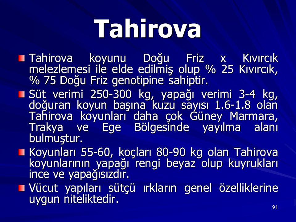 91 Tahirova Tahirova koyunu Doğu Friz x Kıvırcık melezlemesi ile elde edilmiş olup % 25 Kıvırcık, % 75 Doğu Friz genotipine sahiptir. Süt verimi 250-3
