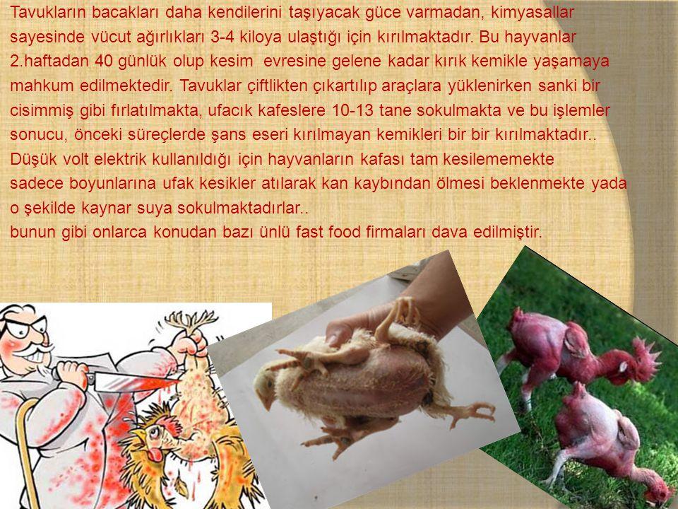 Tavukların bacakları daha kendilerini taşıyacak güce varmadan, kimyasallar sayesinde vücut ağırlıkları 3-4 kiloya ulaştığı için kırılmaktadır. Bu hayv