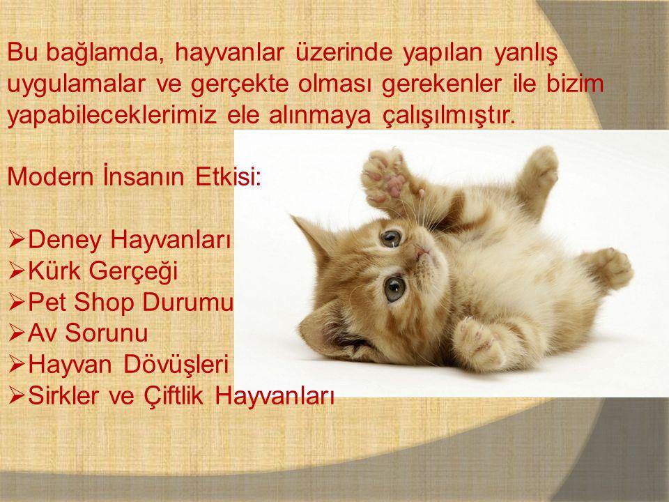Sonrasında; Genel Mevzuat ve Mevcut Durum:  Evrensel Hayvan Hakları Bildirgesi  Türkiye'de Hayvan Hakları Sonuç olarak ise biz ne yapabiliriz ve yol haritamız hakkında konuşacağız.