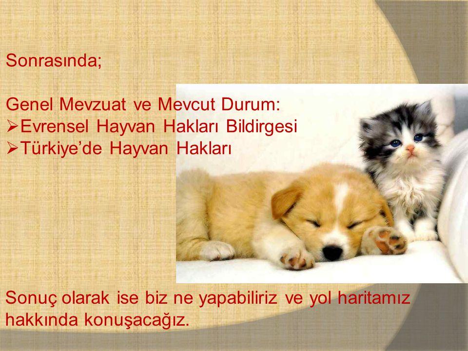Sonrasında; Genel Mevzuat ve Mevcut Durum:  Evrensel Hayvan Hakları Bildirgesi  Türkiye'de Hayvan Hakları Sonuç olarak ise biz ne yapabiliriz ve yol