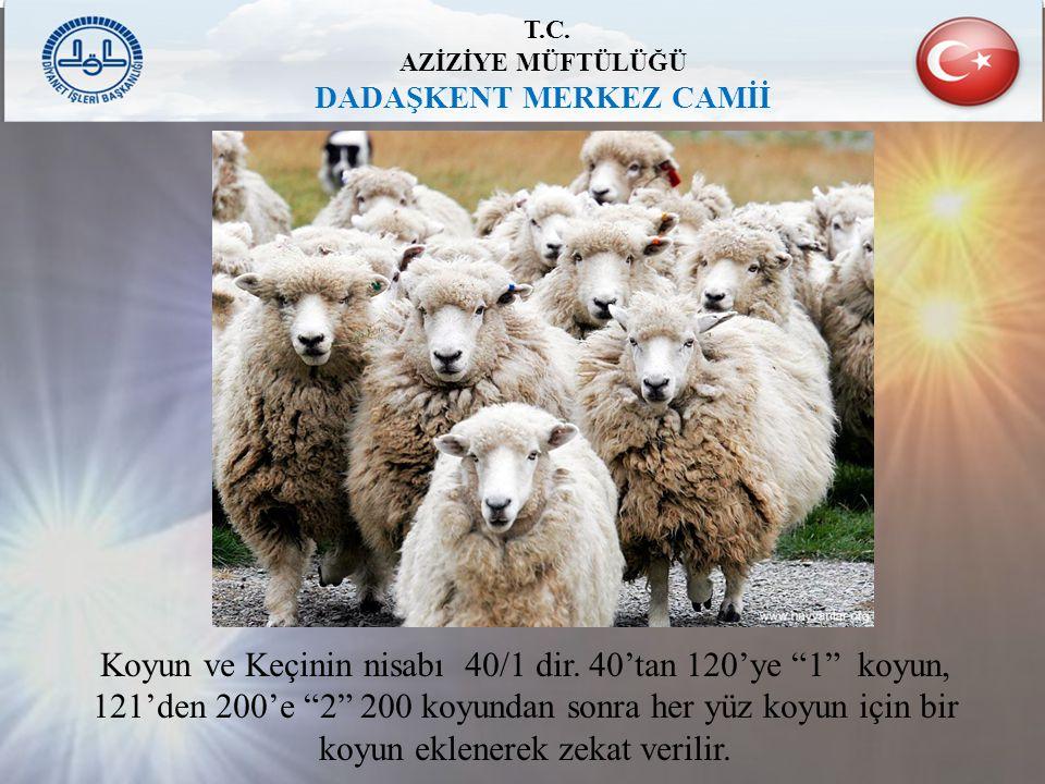 """T.C. AZİZİYE MÜFTÜLÜĞÜ DADAŞKENT MERKEZ CAMİİ Koyun ve Keçinin nisabı 40/1 dir. 40'tan 120'ye """"1"""" koyun, 121'den 200'e """"2"""" 200 koyundan sonra her yüz"""