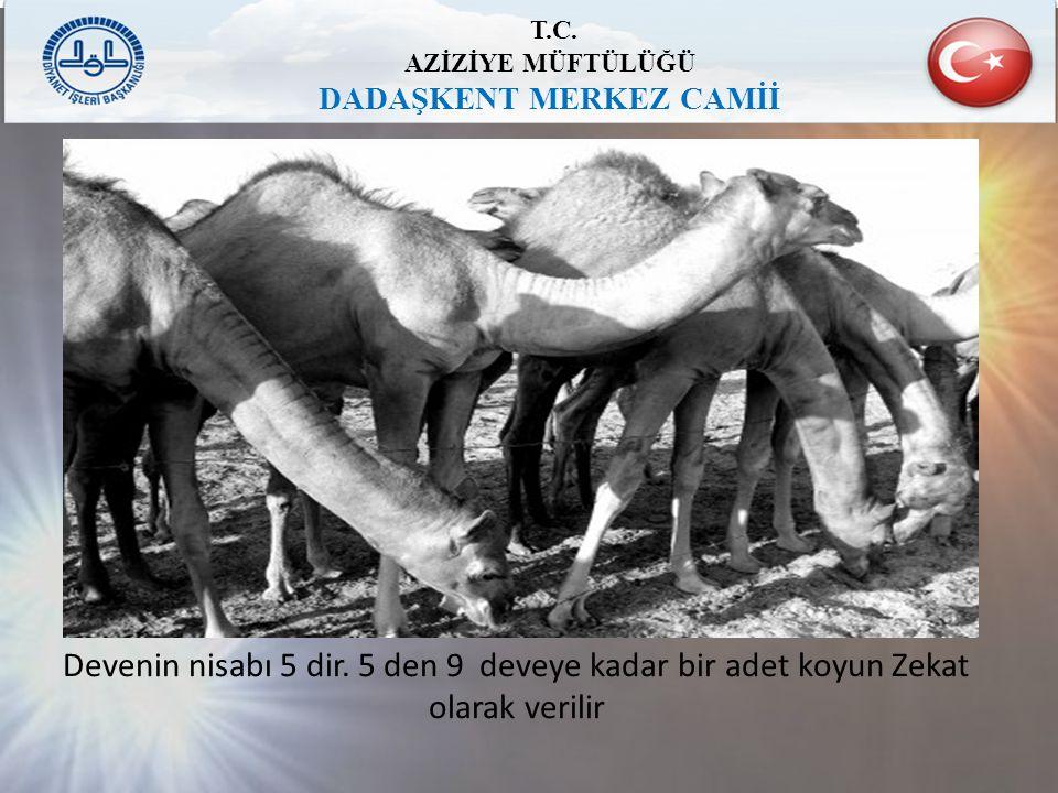 T.C. AZİZİYE MÜFTÜLÜĞÜ DADAŞKENT MERKEZ CAMİİ Devenin nisabı 5 dir. 5 den 9 deveye kadar bir adet koyun Zekat olarak verilir