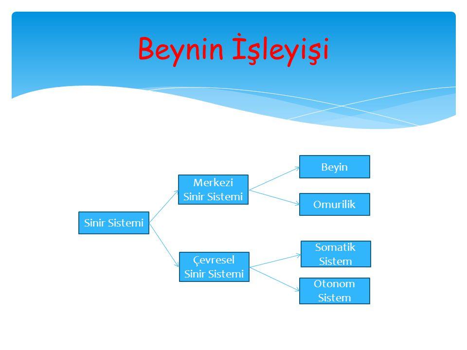 Sinir Sistemi Merkezi Sinir Sistemi Çevresel Sinir Sistemi Beyin Omurilik Somatik Sistem Otonom Sistem