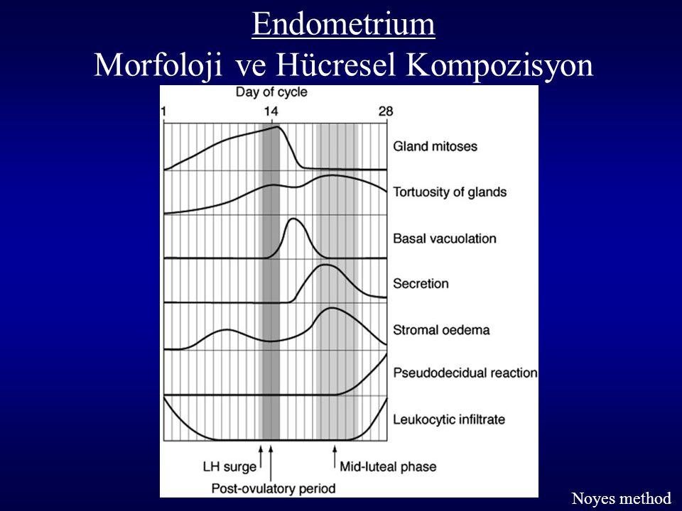 Noyes method Endometrium Morfoloji ve Hücresel Kompozisyon