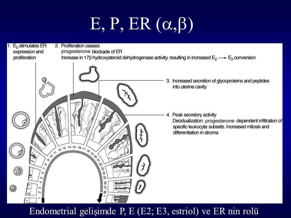 E, P, ER ( ,  ) Endometrial gelişimde P, E (E2; E3, estriol) ve ER nin rolü