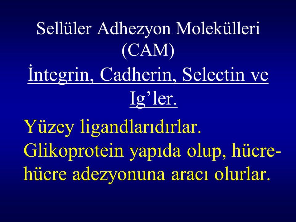 Sellüler Adhezyon Molekülleri (CAM) İntegrin, Cadherin, Selectin ve Ig'ler. Yüzey ligandlarıdırlar. Glikoprotein yapıda olup, hücre- hücre adezyonuna