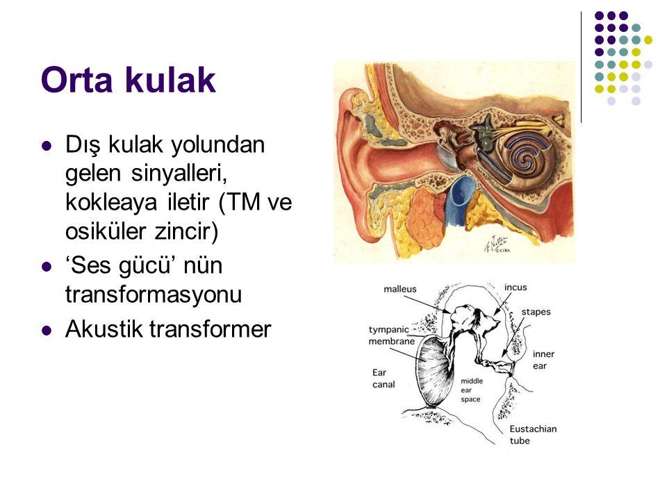 Orta kulak  Dış kulak yolundan gelen sinyalleri, kokleaya iletir (TM ve osiküler zincir)  'Ses gücü' nün transformasyonu  Akustik transformer