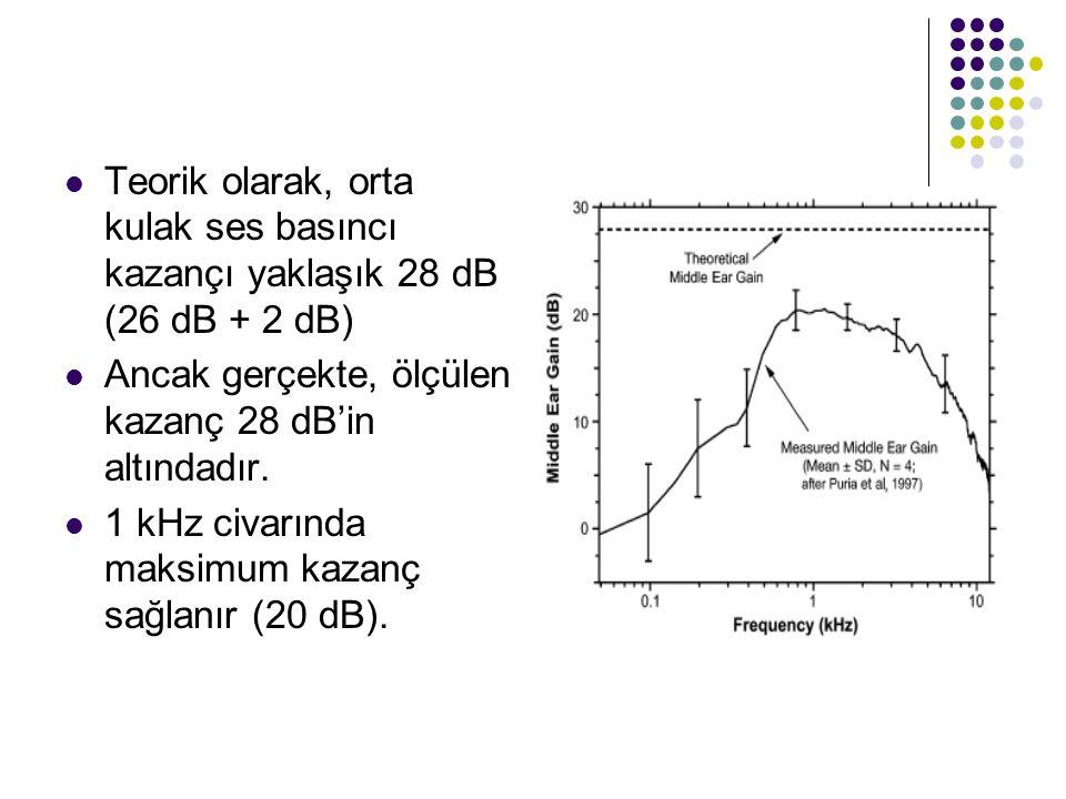  Teorik olarak, orta kulak ses basıncı kazançı yaklaşık 28 dB (26 dB + 2 dB)  Ancak gerçekte, ölçülen kazanç 28 dB'in altındadır.