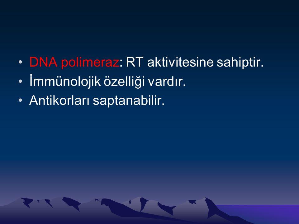 •DNA polimeraz: RT aktivitesine sahiptir. •İmmünolojik özelliği vardır. •Antikorları saptanabilir.
