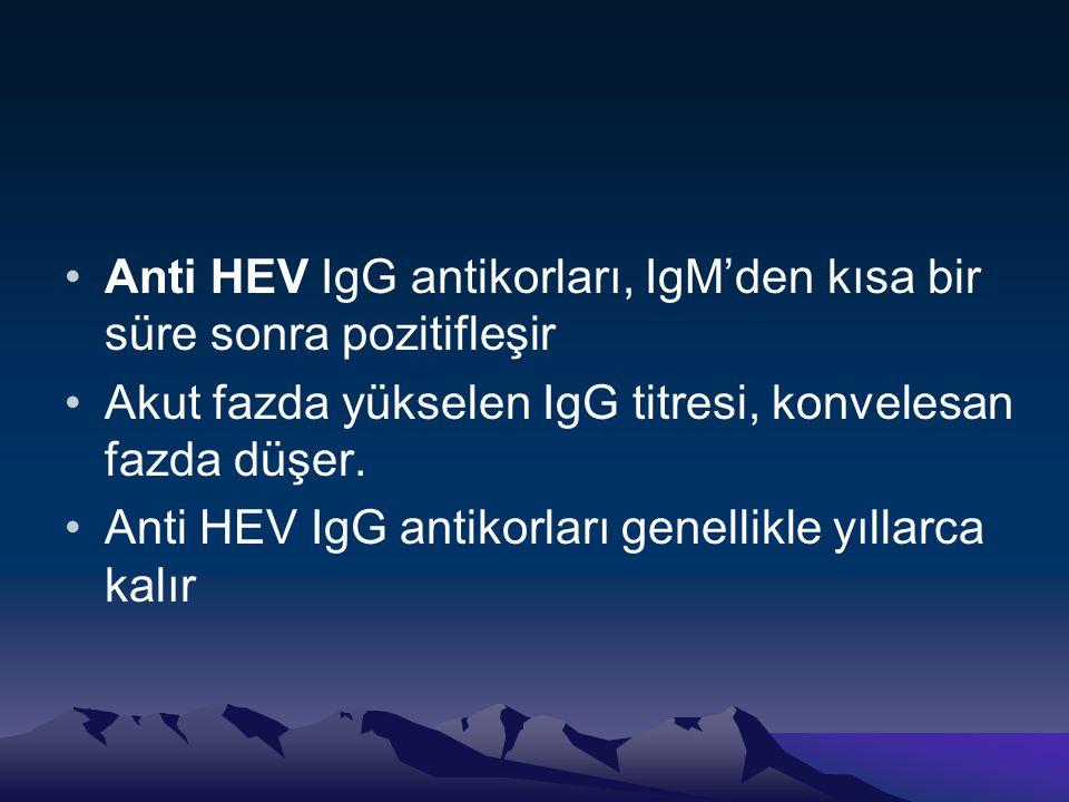 •Anti HEV IgG antikorları, IgM'den kısa bir süre sonra pozitifleşir •Akut fazda yükselen IgG titresi, konvelesan fazda düşer. •Anti HEV IgG antikorlar