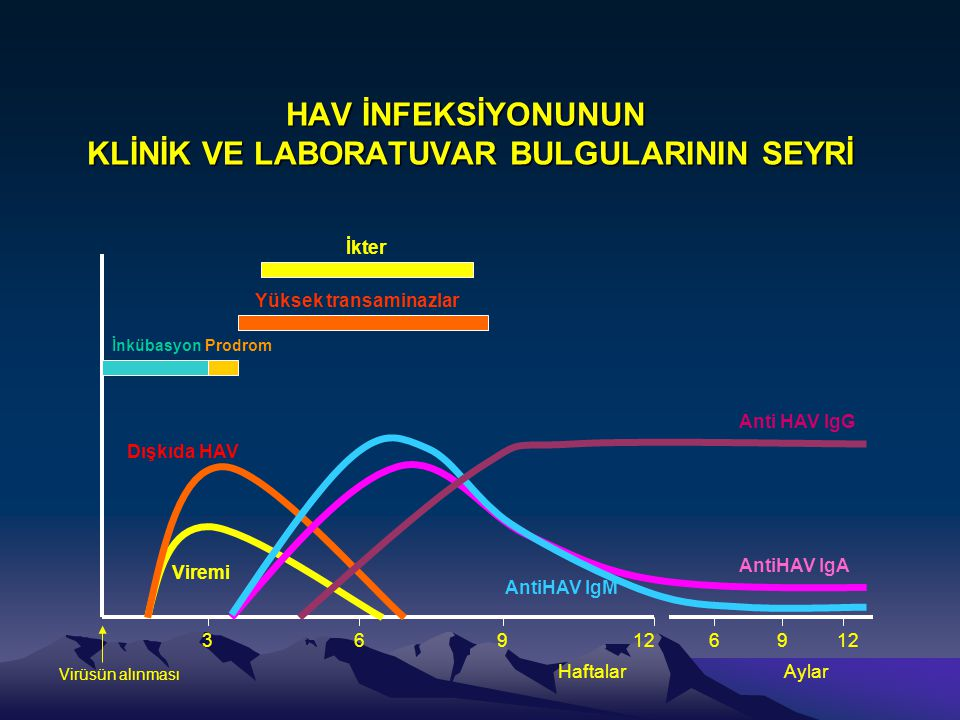 HAV İNFEKSİYONUNUN KLİNİK VE LABORATUVAR BULGULARININ SEYRİ Dışkıda HAV Viremi Anti HAV IgG AntiHAV IgA AntiHAV IgM İnkübasyon Prodrom Yüksek transami