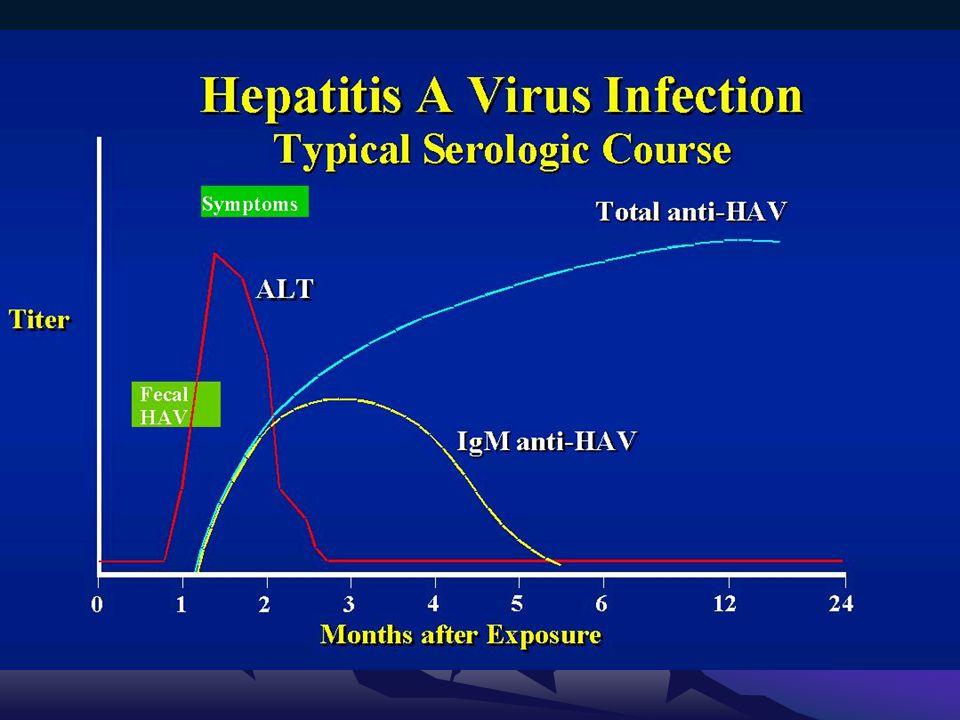 •Anti HEV IgG antikorları, IgM'den kısa bir süre sonra pozitifleşir •Akut fazda yükselen IgG titresi, konvelesan fazda düşer.
