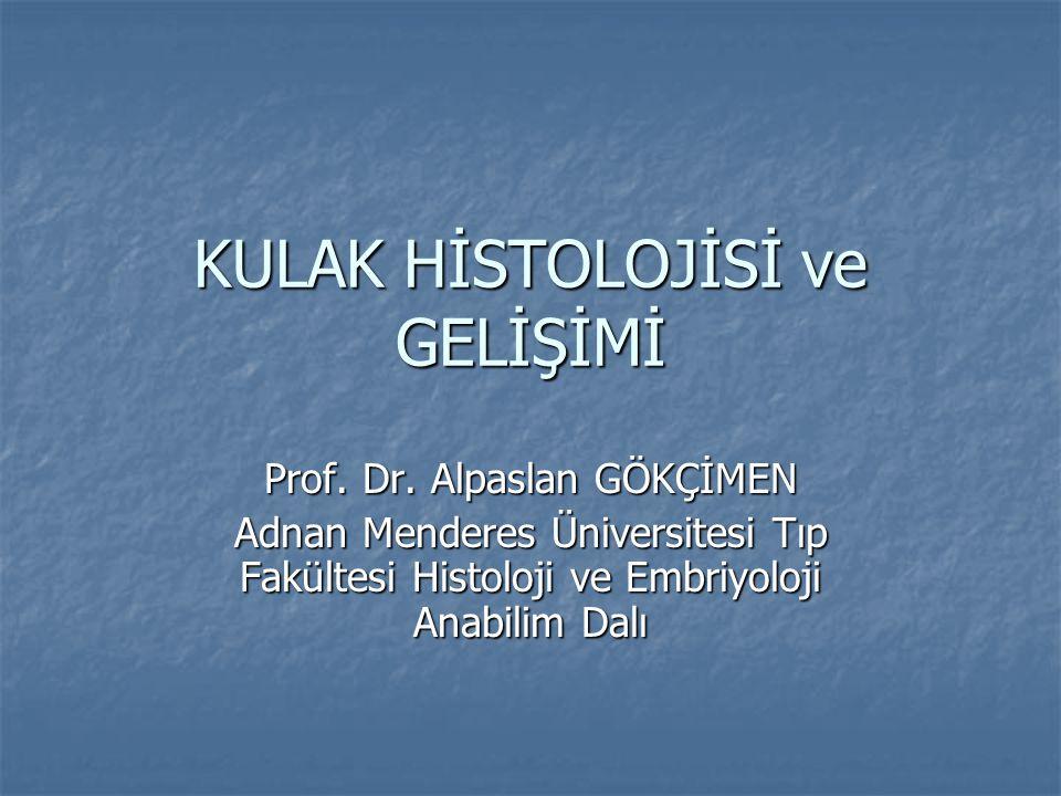KULAK HİSTOLOJİSİ ve GELİŞİMİ Prof. Dr. Alpaslan GÖKÇİMEN Adnan Menderes Üniversitesi Tıp Fakültesi Histoloji ve Embriyoloji Anabilim Dalı