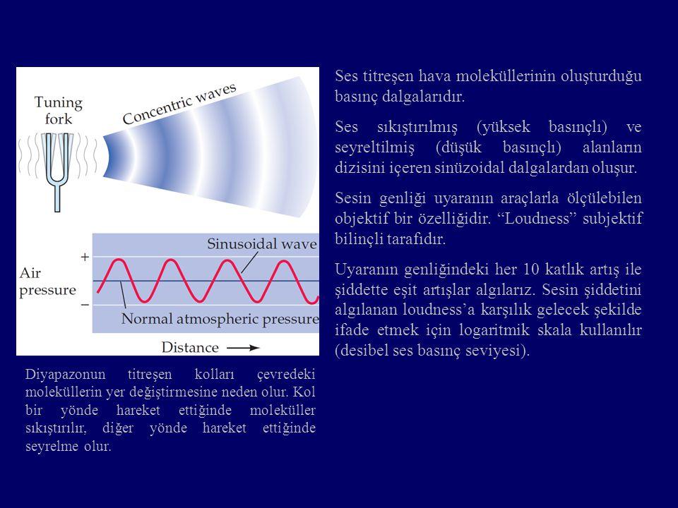 Ses titreşen hava moleküllerinin oluşturduğu basınç dalgalarıdır.