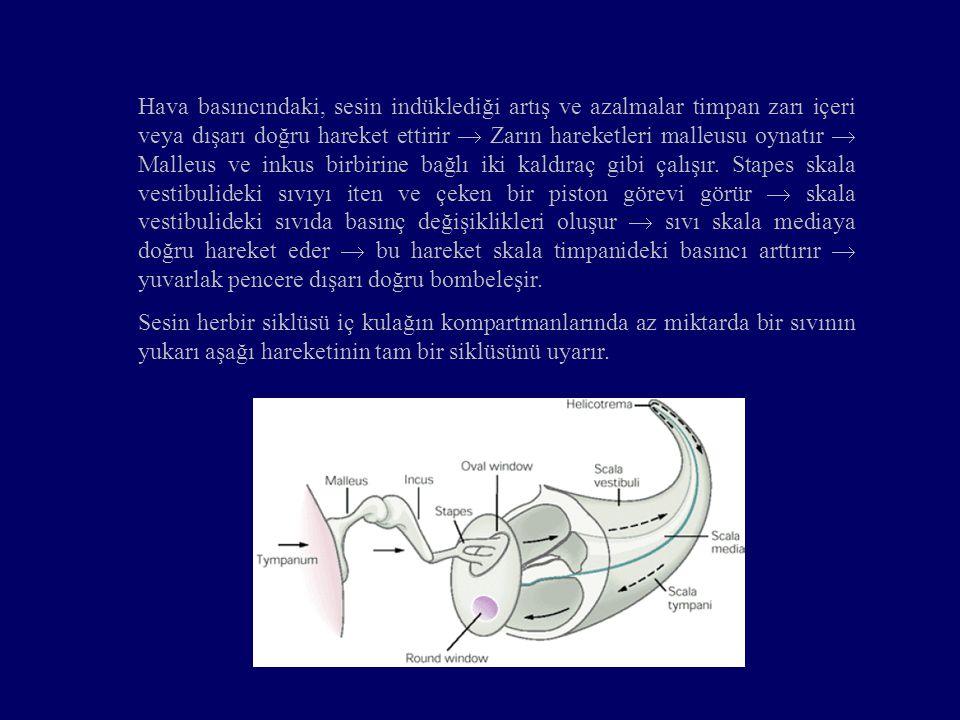 Hava basıncındaki, sesin indüklediği artış ve azalmalar timpan zarı içeri veya dışarı doğru hareket ettirir  Zarın hareketleri malleusu oynatır  Malleus ve inkus birbirine bağlı iki kaldıraç gibi çalışır.