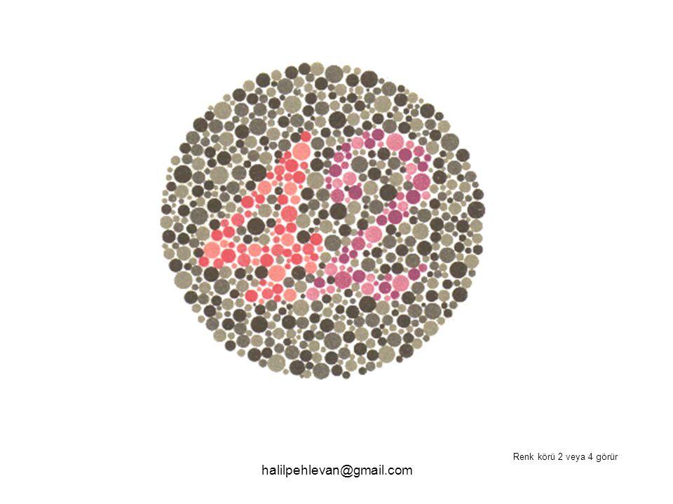 halilpehlevan@gmail.com Renk körü 2 veya 4 görür