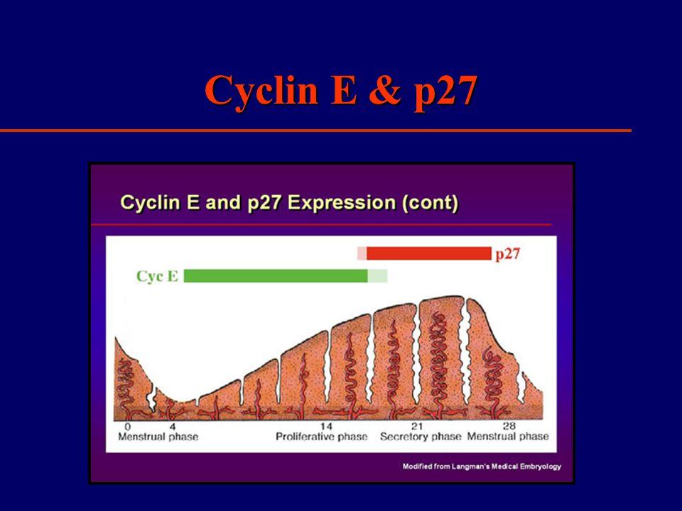 Cyclin E & p27