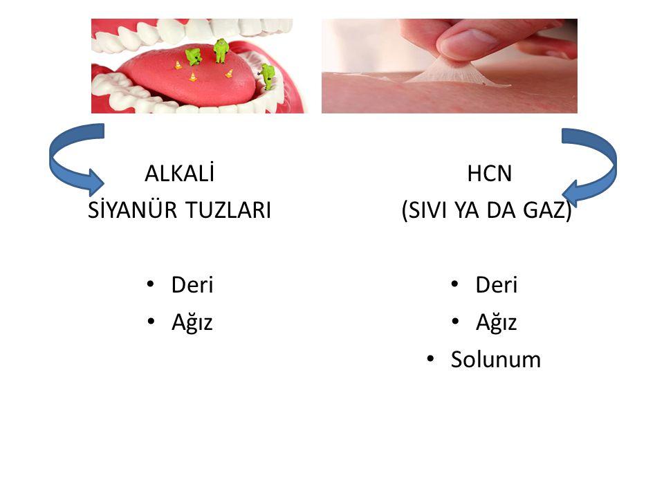 ALKALİ SİYANÜR TUZLARI • Deri • Ağız HCN (SIVI YA DA GAZ) • Deri • Ağız • Solunum