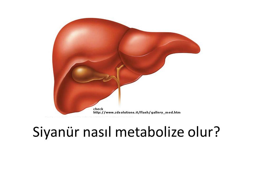 Siyanür nasıl metabolize olur?