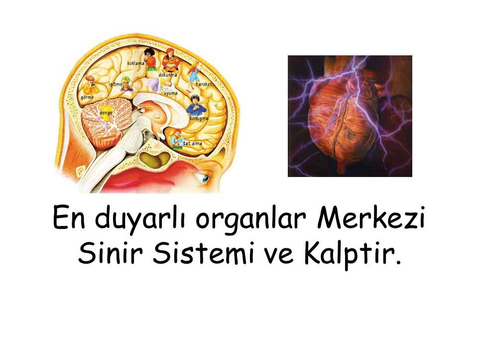 En duyarlı organlar Merkezi Sinir Sistemi ve Kalptir.
