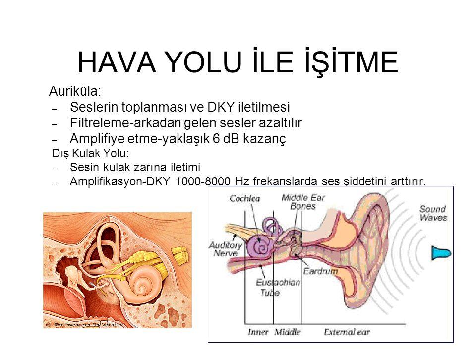 HAVA YOLU İLE İŞİTME Auriküla: – Seslerin toplanması ve DKY iletilmesi – Filtreleme-arkadan gelen sesler azaltılır – Amplifiye etme-yaklaşık 6 dB kaza