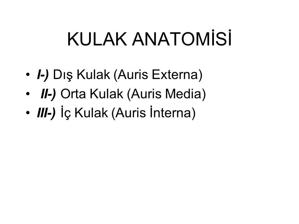 KULAK ANATOMİSİ •I-) Dış Kulak (Auris Externa) • II-) Orta Kulak (Auris Media) •III-) İç Kulak (Auris İnterna)