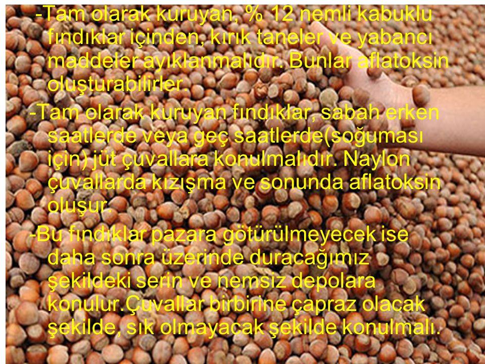 -Tam olarak kuruyan, % 12 nemli kabuklu fındıklar içinden, kırık taneler ve yabancı maddeler ayıklanmalıdır. Bunlar aflatoksin oluşturabilirler. -Tam