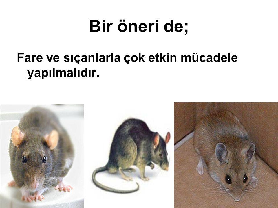Bir öneri de; Fare ve sıçanlarla çok etkin mücadele yapılmalıdır.