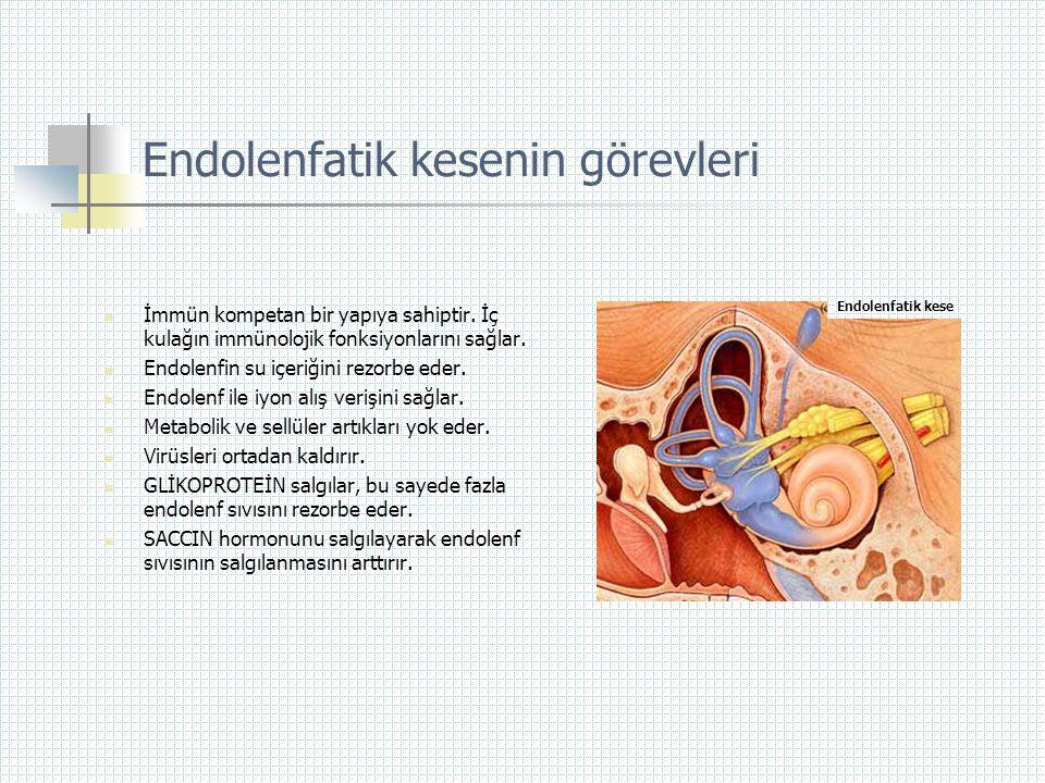 Endolenfatik kesenin görevleri  İmmün kompetan bir yapıya sahiptir. İç kulağın immünolojik fonksiyonlarını sağlar.  Endolenfin su içeriğini rezorbe