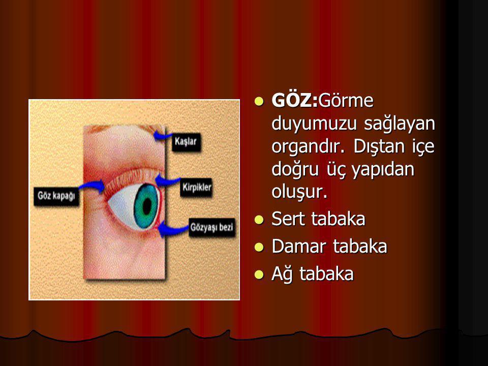  Dış ortamdan gelen uyartıları algılamamızı sağlayan organlardır  Göz  Kulak  Burun  Dil  Deri