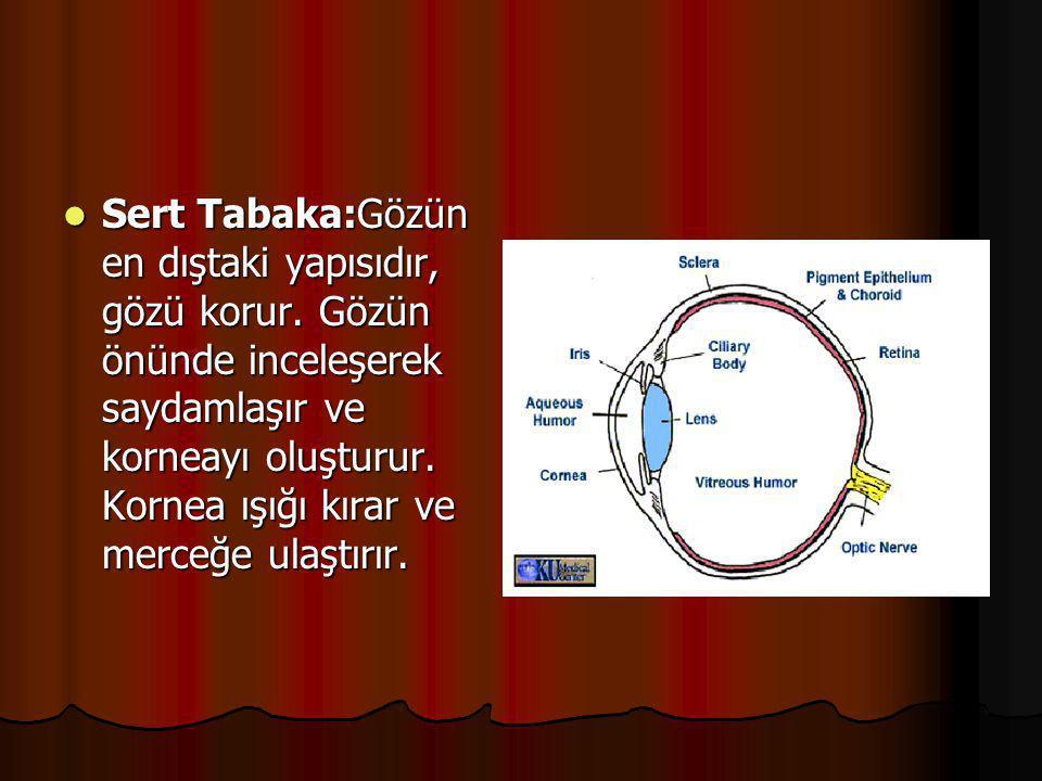  GÖZ:Görme duyumuzu sağlayan organdır. Dıştan içe doğru üç yapıdan oluşur.  Sert tabaka  Damar tabaka  Ağ tabaka