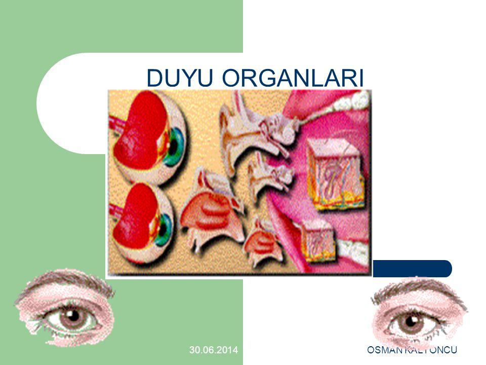 OSMAN KALYONCU 30.06.2014 SORU:17 Östaki borusu hangisinde verilenlerle bağlantılıdır.