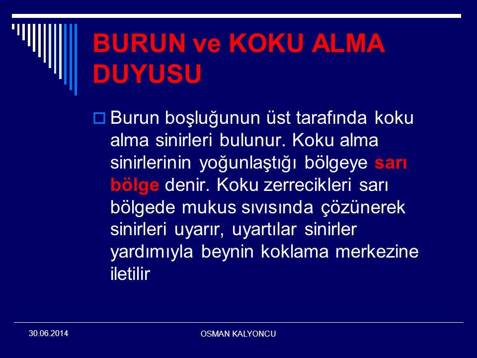 OSMAN KALYONCU 30.06.2014 BURUN ve KOKU ALMA DUYUSU  Burun boşluğunun üst tarafında koku alma sinirleri bulunur. Koku alma sinirlerinin yoğunlaştığı