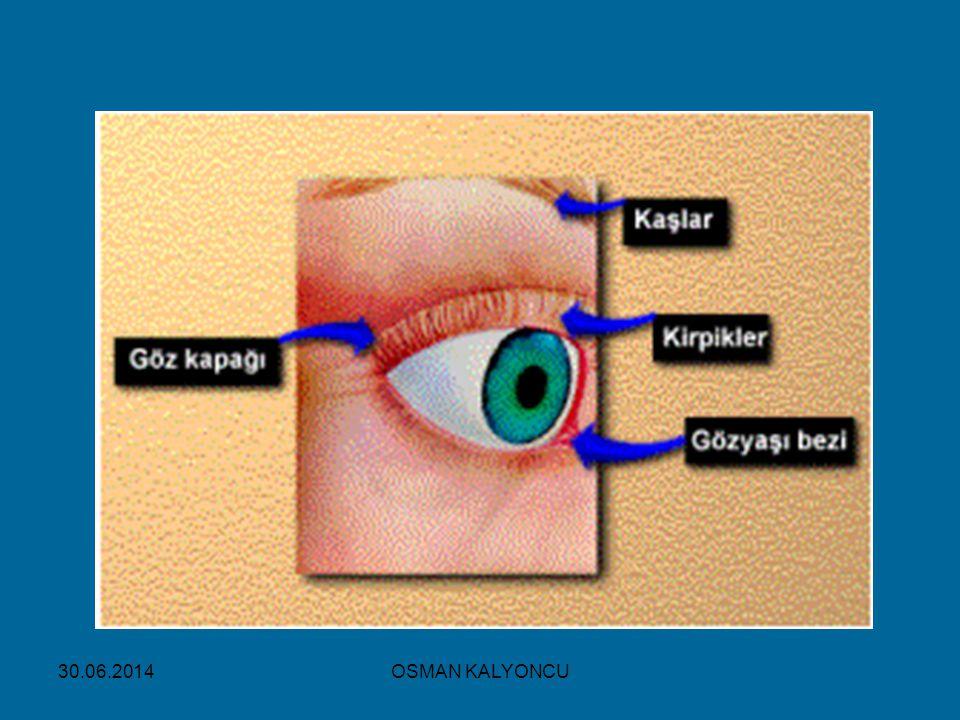 OSMAN KALYONCU 30.06.2014 İŞİTME OLAYI:  İşitme Yolu: Kulak kepçesi  Kulak yolu  Kulak zarı  Örs, çekiç,Üzengi  Oval pencere  Dalız  Salyangoz  İşitme sinirleri  Beyindeki işitme merkezi  Kulak Sağlığı  Östaki borusu ile ağızdan ve burundan giren mikroplar orta kulak iltihabı denen tehlikeli bir hastalığa yol açar.