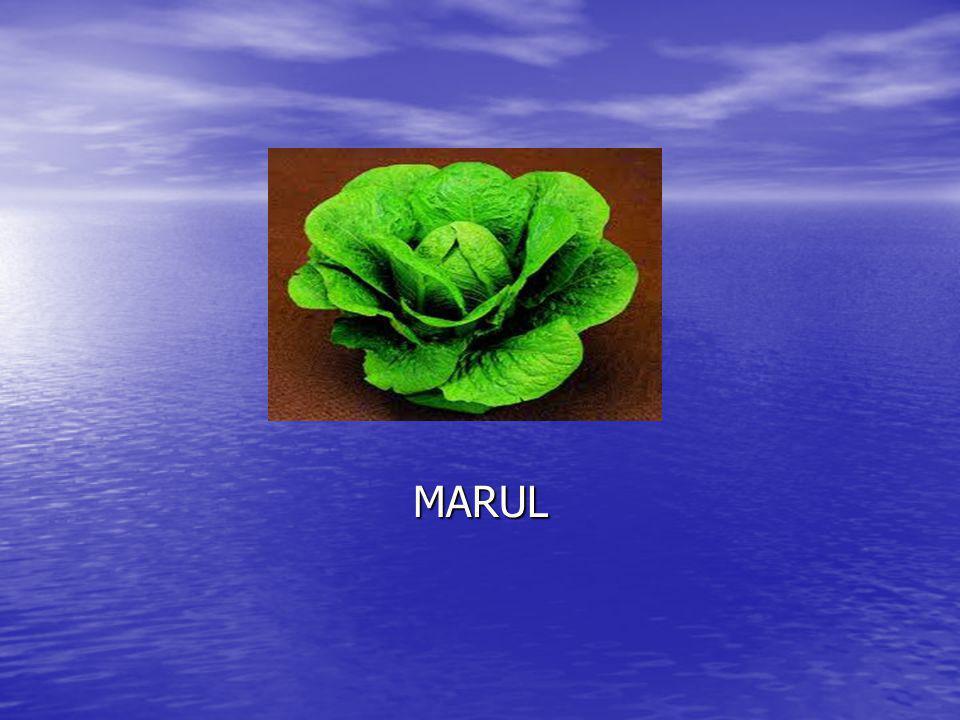 MARUL