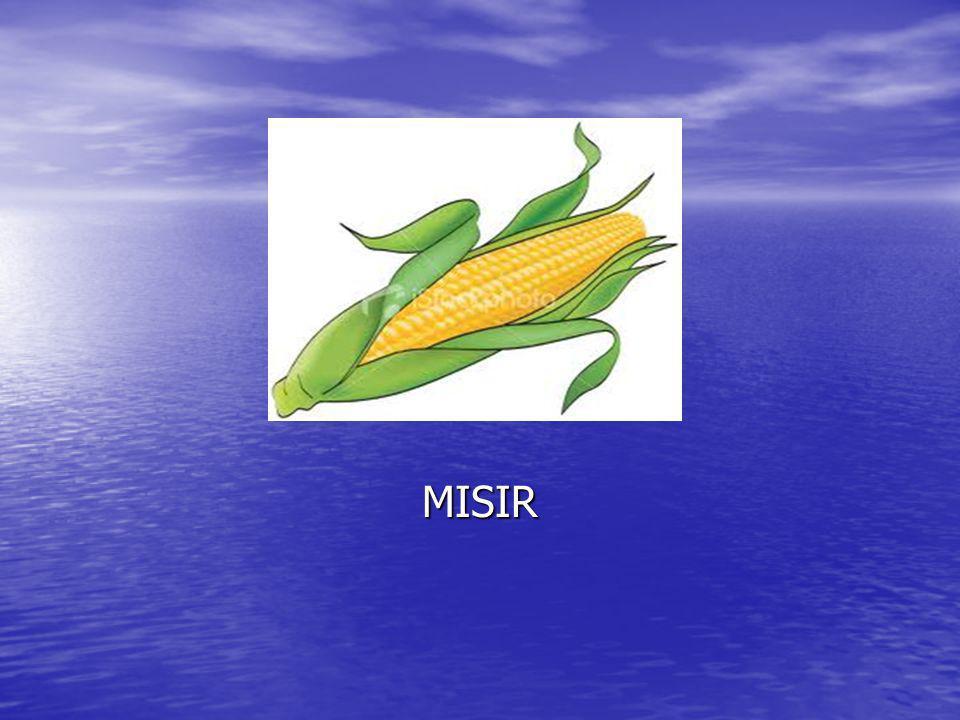 MISIR