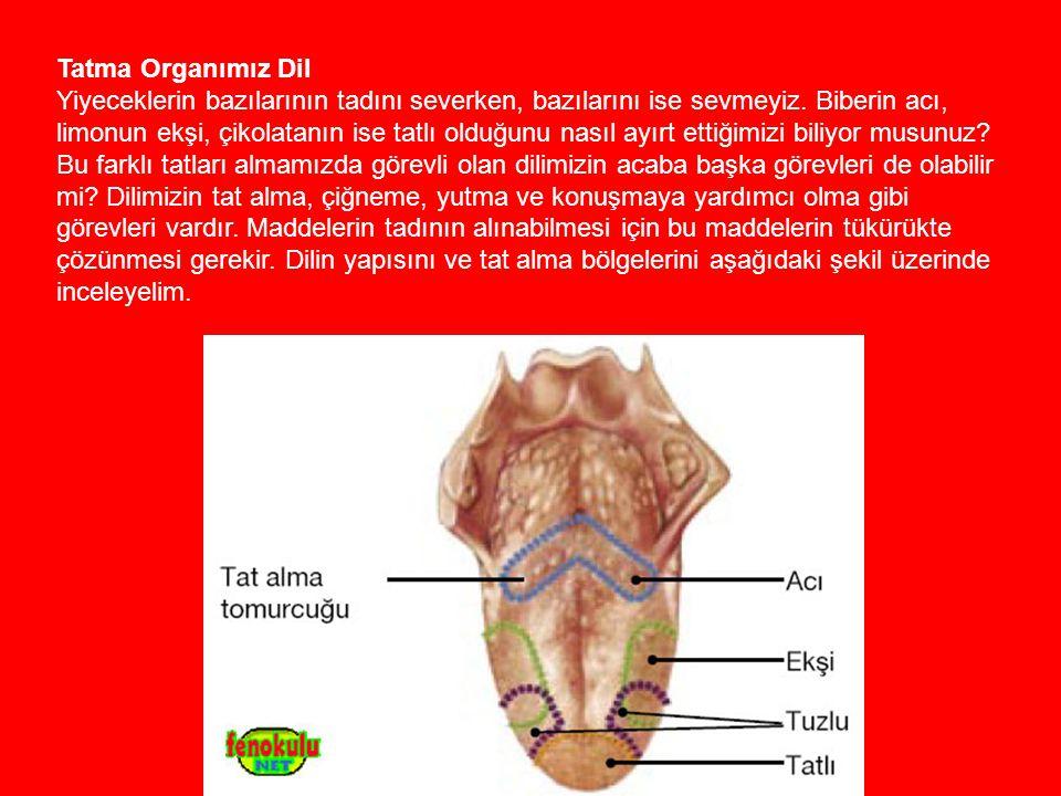 Tatma Organımız Dil Yiyeceklerin bazılarının tadını severken, bazılarını ise sevmeyiz.
