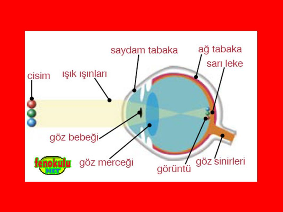 Göz Kusurları ve Bu Kusurların Tedavi Yolları Göz kusurları doğuştan olabileceği gibi sonradan da oluşabilir.