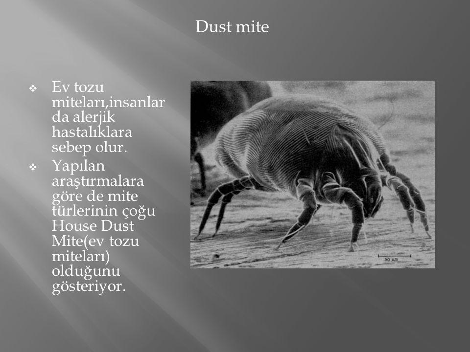  Ev tozu miteları,insanlar da alerjik hastalıklara sebep olur.  Yapılan araştırmalara göre de mite türlerinin çoğu House Dust Mite(ev tozu miteları)