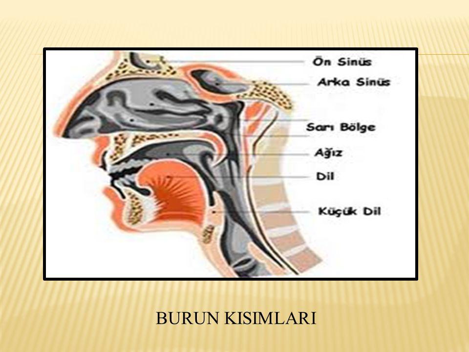 BURUN KISIMLARI