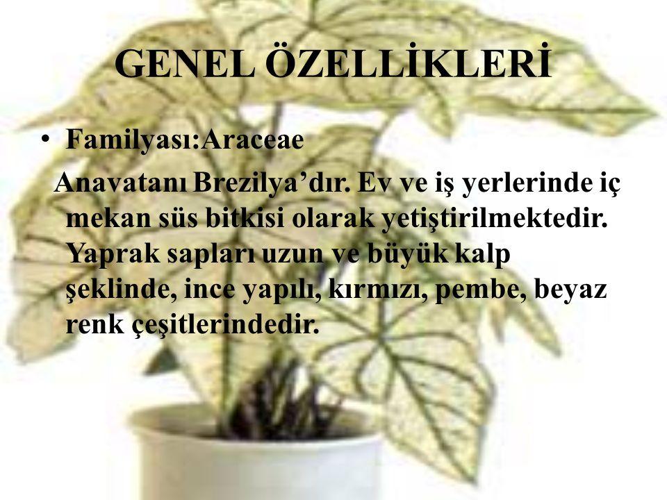 GENEL ÖZELLİKLERİ • Familyası:Araceae Anavatanı Brezilya'dır. Ev ve iş yerlerinde iç mekan süs bitkisi olarak yetiştirilmektedir. Yaprak sapları uzun