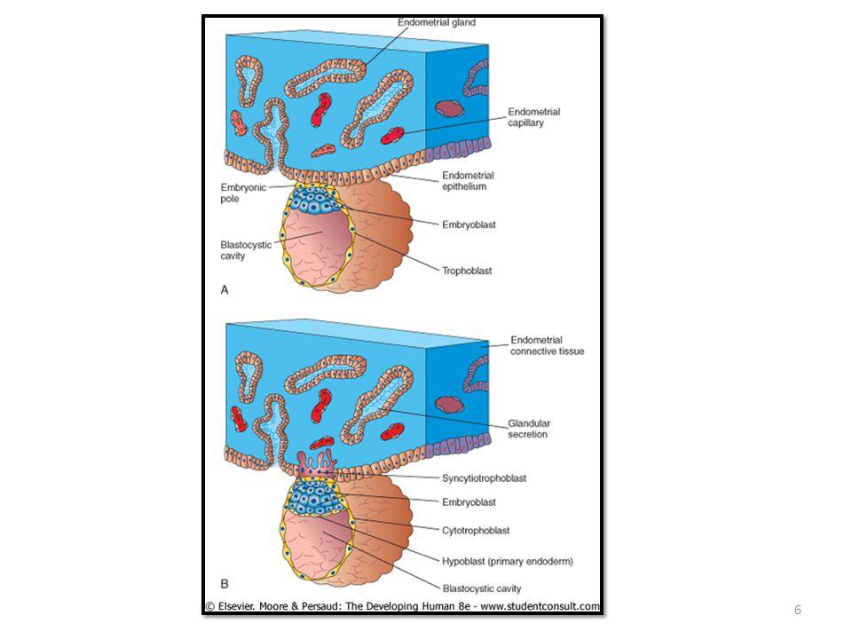 Uterus Reseptivitesi ile İlgili Markır Moleküller Faktörler Salındığı Yer hCG, MMP, IL-1, TNF alfa, PDGF, trofonin, integrinler, fibronektin, HLA-G, yüzey Blastosist İntegrinler, pinopodlar, musinler, HB-EGF, COX-2, LIF, osteopontin Yüzey değişikleri İntegrinlerTrofoektoderm, Endometriyum LIF, EGF, IGF II, kalsitonin, glikodelinEndometriyal glandlar VEGF, PDGF, PAF, VCAM, PECAM, MCAMSinsityotrofoblastlar Progesteron (P4), östrojenOvaryum 17