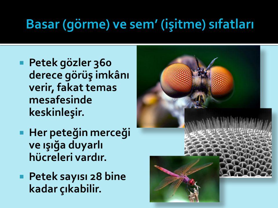  Petek gözler 360 derece görüş imkânı verir, fakat temas mesafesinde keskinleşir.  Her peteğin merceği ve ışığa duyarlı hücreleri vardır.  Petek sa