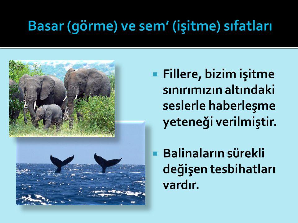  Fillere, bizim işitme sınırımızın altındaki seslerle haberleşme yeteneği verilmiştir.  Balinaların sürekli değişen tesbihatları vardır.