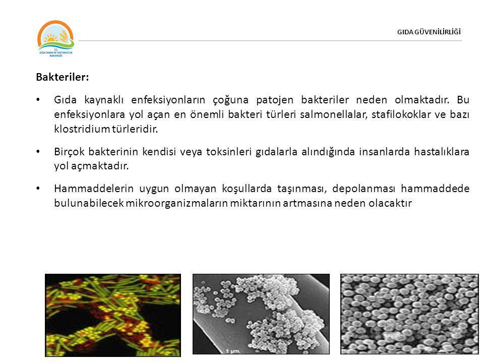 GIDA GÜVENİLİRLİĞİ Bakteriler: • Gıda kaynaklı enfeksiyonların çoğuna patojen bakteriler neden olmaktadır. Bu enfeksiyonlara yol açan en önemli bakter