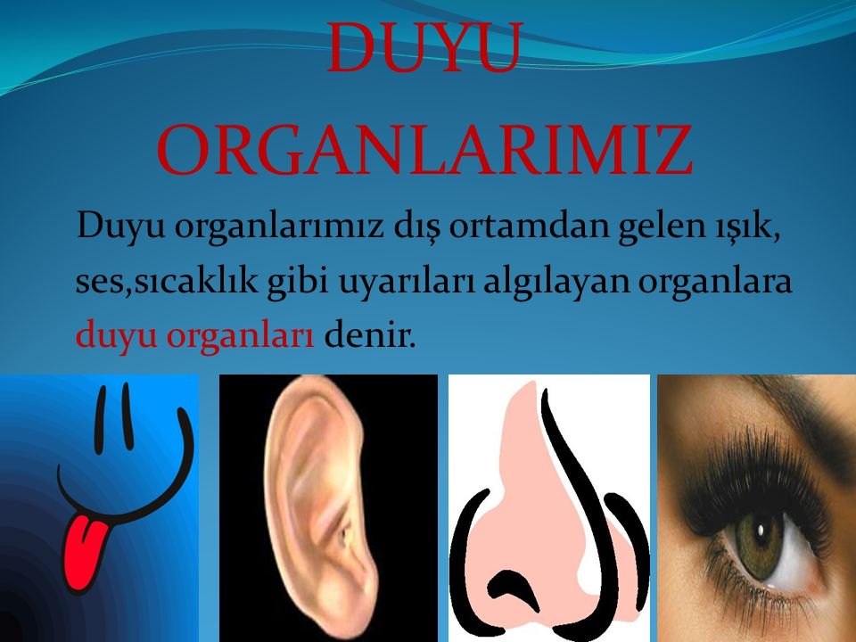 GÖZ Göz görme organıdır.Işık almak için özelleşmiştir.Görmeyi sağlayan yapılar ışığı algılıyan duyu almaçları,göz merceği ve görme sinirleridir.Koruyucu yapılar ise kaşlar,göz kapakları,gözyaşı bezleridir.Göz yaşı bezleri gözümüzün nemli kalmasını sağlar.