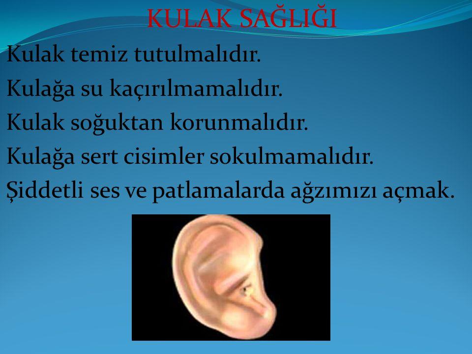 KULAK SAĞLIĞI Kulak temiz tutulmalıdır. Kulağa su kaçırılmamalıdır. Kulak soğuktan korunmalıdır. Kulağa sert cisimler sokulmamalıdır. Şiddetli ses ve
