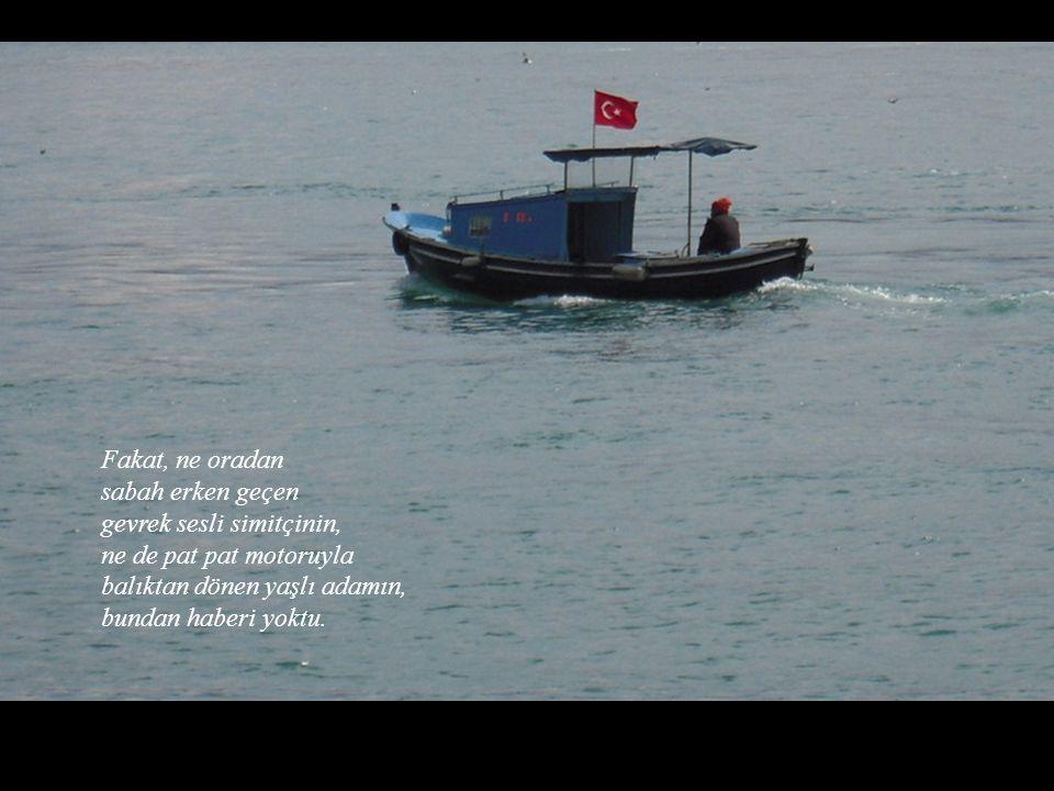 Uyandım baktım ki bir sabah, Orhan Veli'nin martı kuşu geri dönmüş, yeniden omzuna konmuştu.