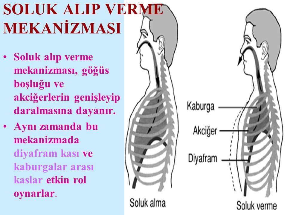 •Soluk alıp verme mekanizması, göğüs boşluğu ve akciğerlerin genişleyip daralmasına dayanır.