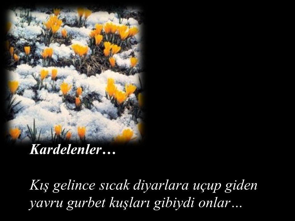 Türkan Saylan, yaşam penceresinin pervazına çok derin izler bırakmış büyük bir insandı… Kardelenlerse onun bizlere hediyesi ve emaneti…